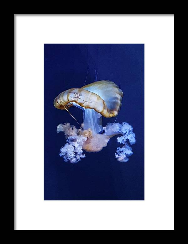 Blue Framed Print featuring the photograph Jellyfish by Carrie Railsback