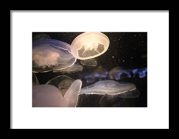 Translucent Jellyfish Framed Print featuring the photograph Jellyfish by Cory Bykoski
