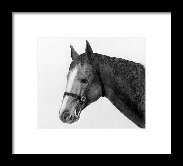 Horse Head In Pencil Framed Print featuring the drawing Jess by Susan Tilley