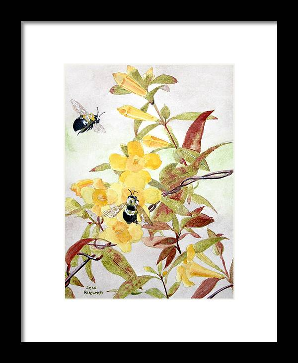 Jasmine Framed Print featuring the painting Jessamine Bee Mine by Jean Blackmer