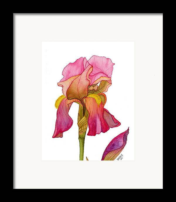 Bearded Iris Framed Print featuring the painting Jody's Iris by Stephanie Jolley