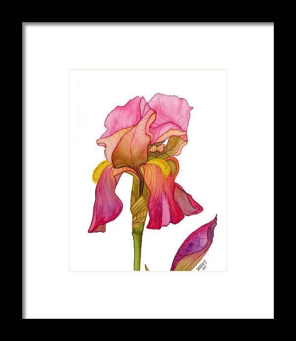 Bearded Iris Framed Print featuring the painting Jody's Iris by Stephanie Jolley