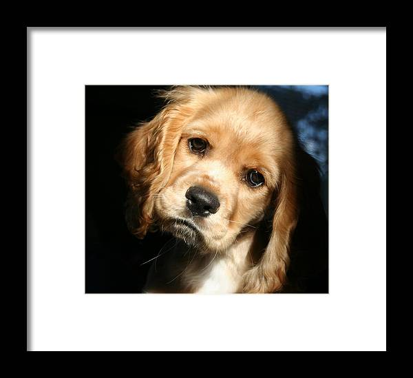 Dog Framed Print featuring the photograph Joe Cocker by Kerry Reed
