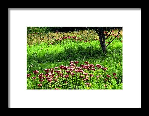 Wildflowers Framed Print featuring the photograph Joe Pye Weed by Roger Soule