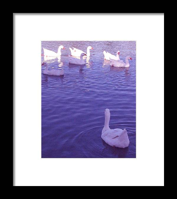 Animal Blue Framed Print featuring the photograph Join Us Blue Cruise by Takayuki Harada
