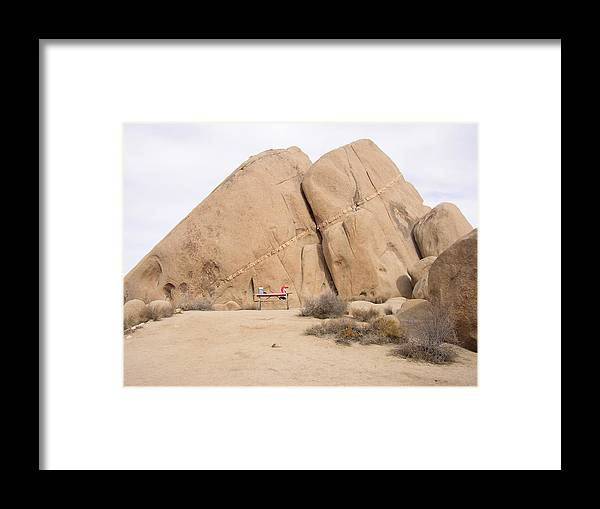 Joshua Tree Framed Print featuring the photograph Joshua Tree by Hans Jankowski