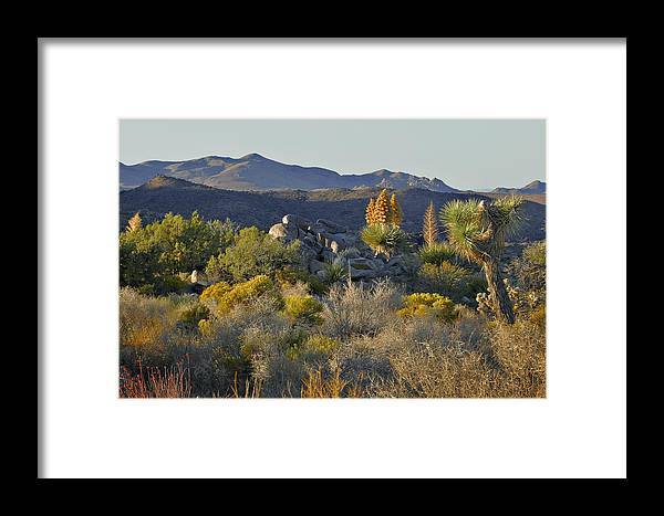Sunset Framed Print featuring the photograph Joshua Tree National Park In California by Christine Till