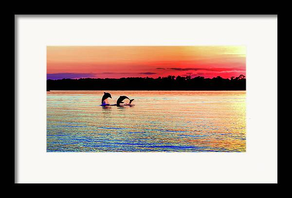 Dolphins Framed Print featuring the photograph Joy Of The Dance by Karen Wiles