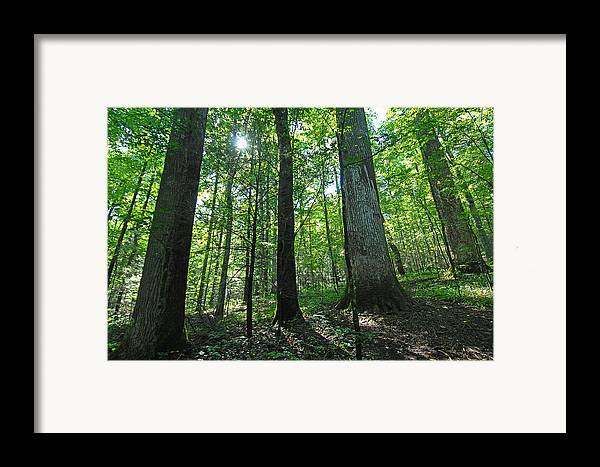 Forest Framed Print featuring the photograph Joyce Kilmer Forest by Alan Lenk