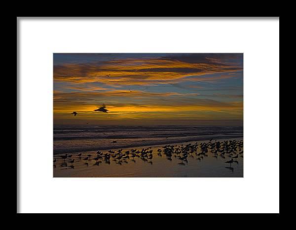Beach Morning Sunrise Ocean Bird Birds Seagulls Gull Gulls Sand Water Wave Waves Cloud Sky Framed Print featuring the photograph Joyful Gathering by Andrei Shliakhau