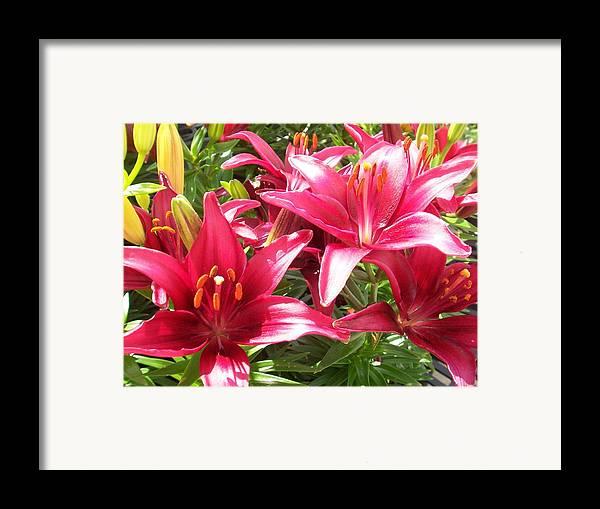 Flowers Framed Print featuring the photograph Joyful Red Lillies by Ellen B Pate