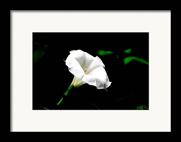 Floral Framed Print featuring the photograph Judy's White Knight by M Ryan