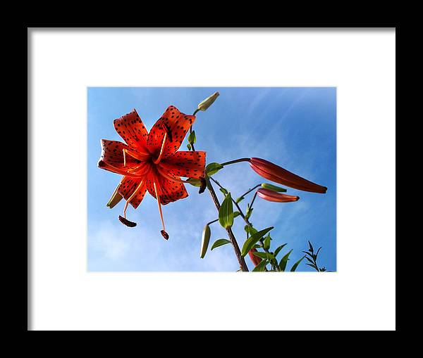 July Framed Print featuring the photograph July by Joy Nichols
