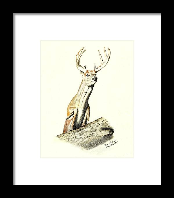 Dan Shuford Framed Print featuring the drawing Jumping Buck by Daniel Shuford