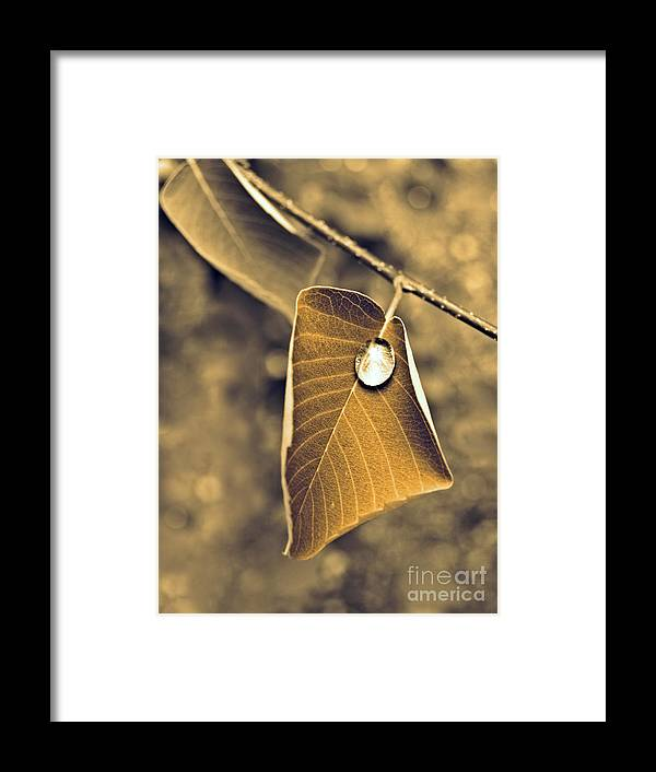 Leaf Framed Print featuring the photograph June 18 2010 by Tara Turner