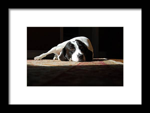 Dogs.animal Framed Print featuring the photograph Junebug by Robert Meanor