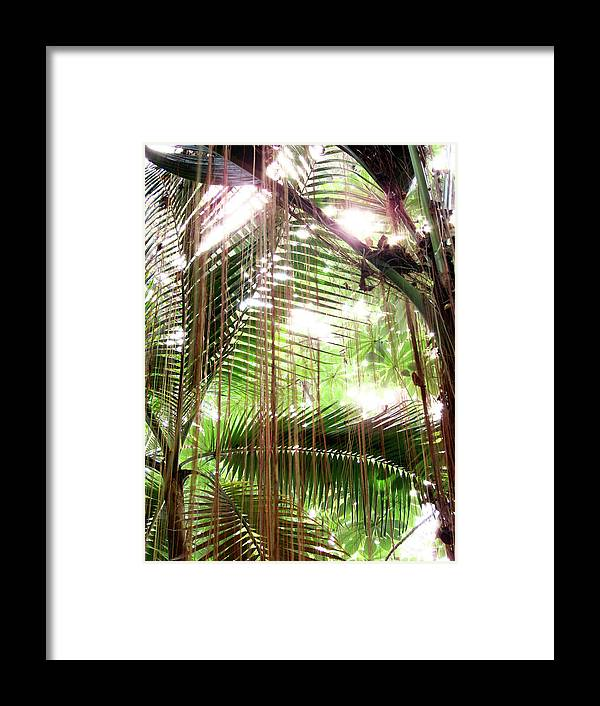 Trees Framed Print featuring the photograph Jungle In There by Mark Holbrook