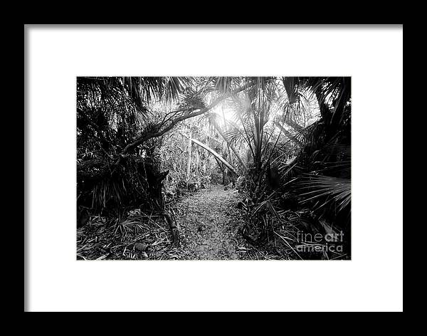 Jungle Framed Print featuring the photograph Jungle Trail by David Lee Thompson