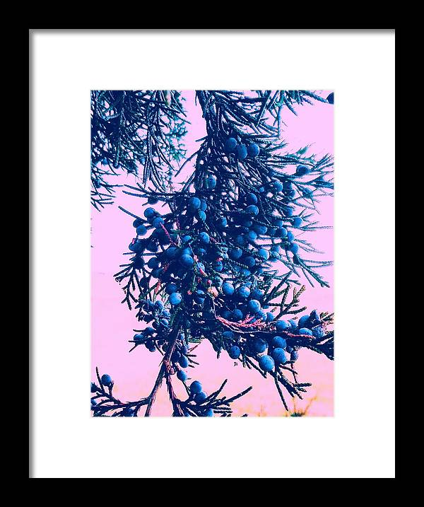 Juniper Framed Print featuring the photograph Juniper by Paul Kercher