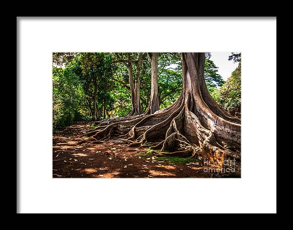 Hawaii Framed Print featuring the photograph Jurassic Park Tree Group by Blake Webster