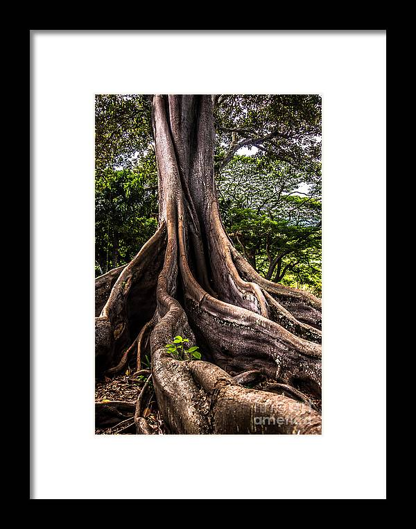 Hawaii Framed Print featuring the photograph Jurassic Park Tree Roots by Blake Webster