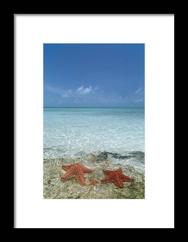 Starfish Framed Print featuring the photograph Just Between Us by Betsy Knapp