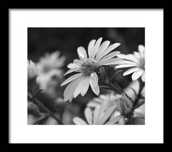 Framed Print featuring the photograph Just Black And White by Luciana Seymour