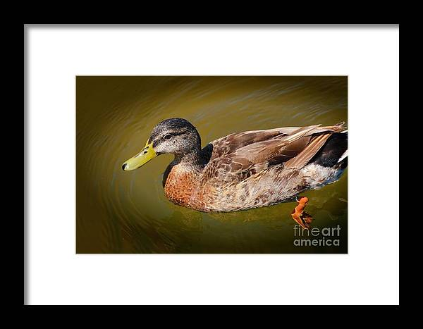 Duck Framed Print featuring the photograph Just Ducky by Pamela Blizzard