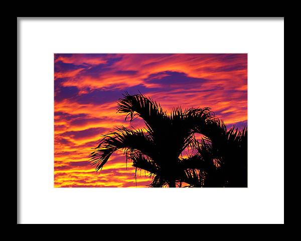 Tropical Framed Print featuring the photograph Just Last Nite by Florene Welebny