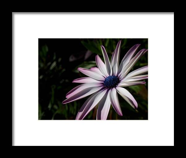 Black Eyed Susan Framed Print featuring the photograph Just Look by Edan Chapman