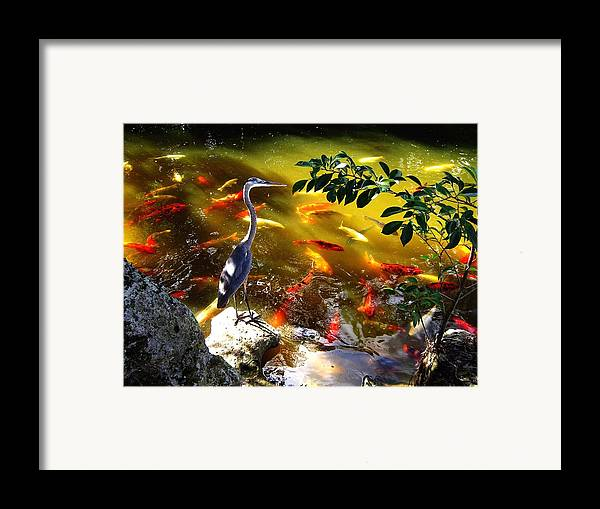 Bird Framed Print featuring the photograph Just Looking by Blima Efraim