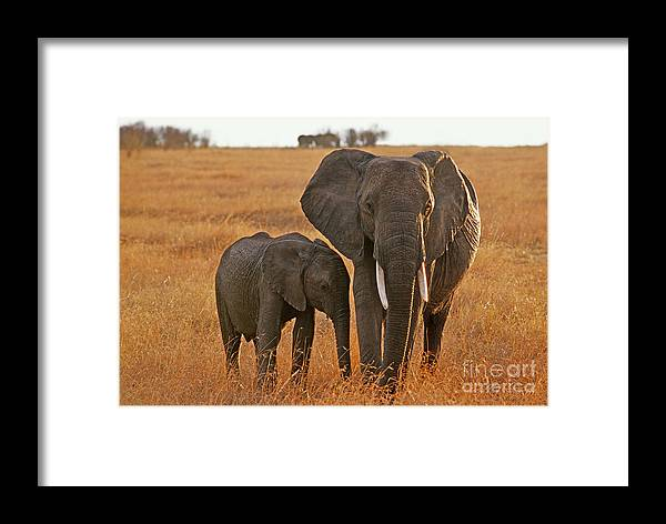 Africa Framed Print featuring the photograph Just Mom And Me by Sandra Bronstein