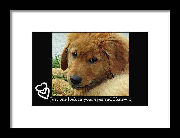 Puppy Framed Print featuring the photograph Just One Look by Debbie Lind