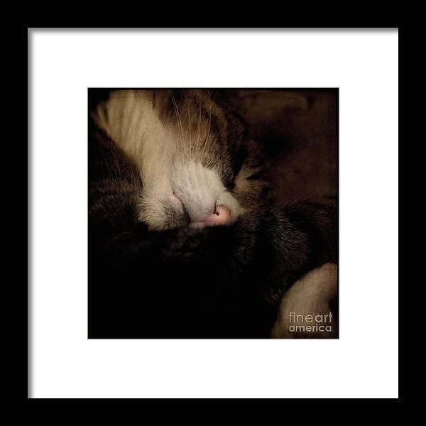 Cat Framed Print featuring the photograph Just Sleep by Angel Ciesniarska
