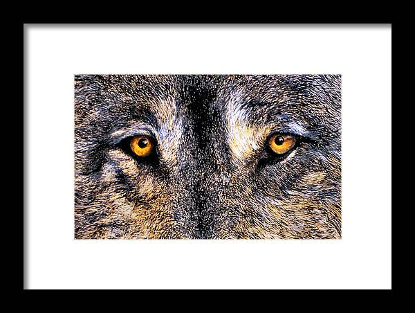 Wolf Eyes Framed Print featuring the print Just Watching Wolf by JoLyn Holladay