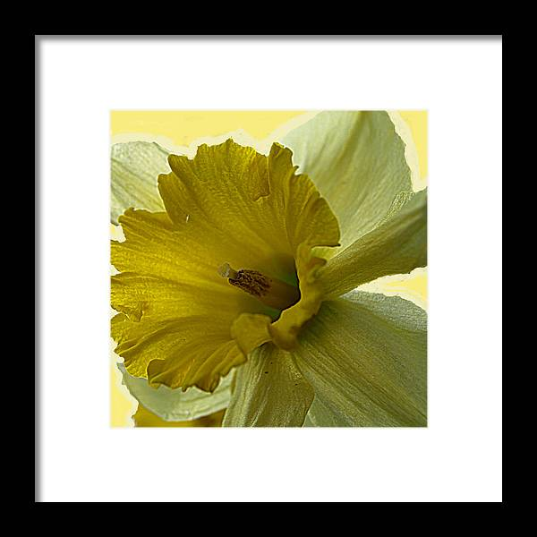 Yellow Framed Print featuring the painting Just Yellow by Kim