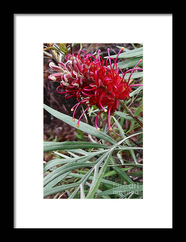 Kahili Flower Framed Print featuring the photograph Kahili Flower by James Temple