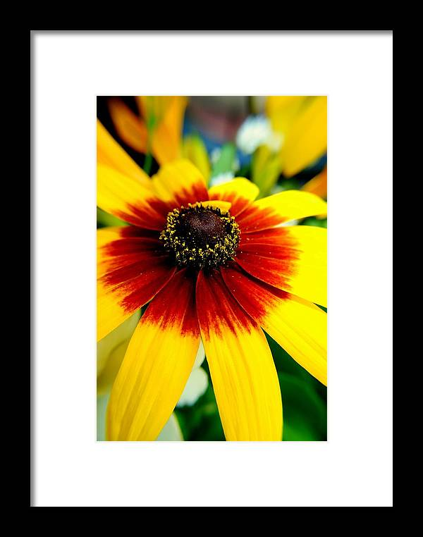 Flowers Framed Print featuring the photograph Kaleidoscope Bouquet by Frozen in Time Fine Art Photography
