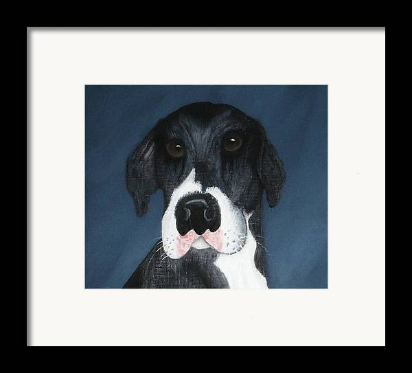 Great Danes Framed Print featuring the painting Kane by Rebecca Fitchett