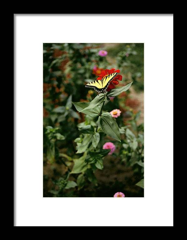 Butterfly Framed Print featuring the photograph Kathy's Butterfly by Lynard Stroud