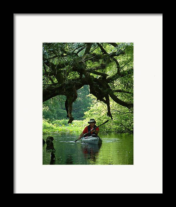 Kayak Framed Print featuring the photograph Kayaking In Dismal Swamp by Charles Ridgway
