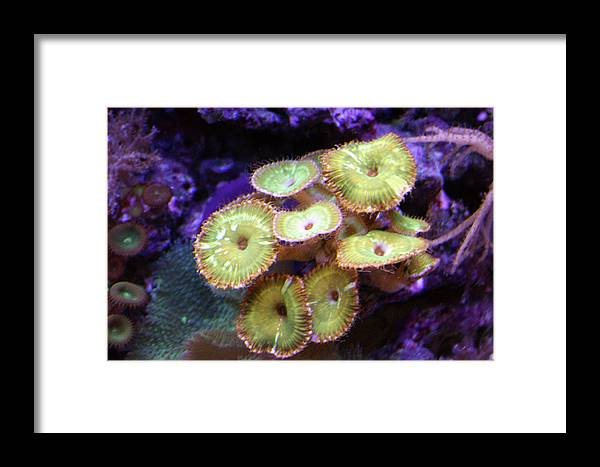 Saltwater Framed Print featuring the photograph ...keep Your Anemones Closer by Kat Dee