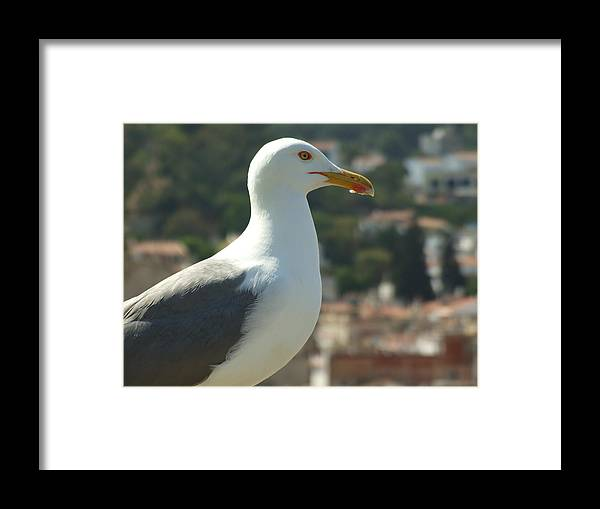 Seagull Framed Print featuring the photograph Keeper Of The Citadel by Dorin Emanoil Pirvu
