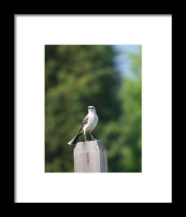 Bird Framed Print featuring the photograph Keeping An Eye by Magda Levin-Gutierrez