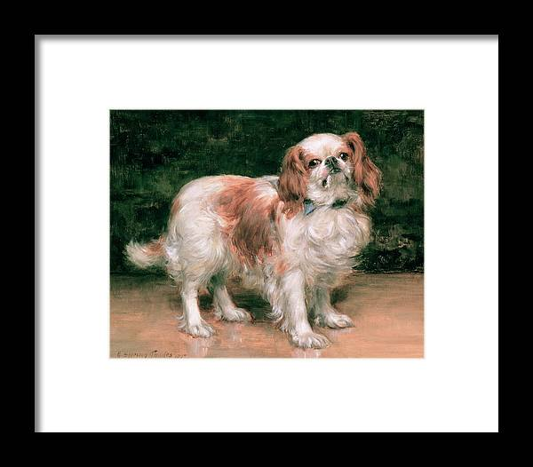 King Charles Spaniel Framed Print featuring the painting King Charles Spaniel by George Sheridan Knowles