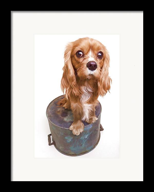 Dog Framed Print featuring the photograph King Charles Spaniel Puppy by Edward Fielding