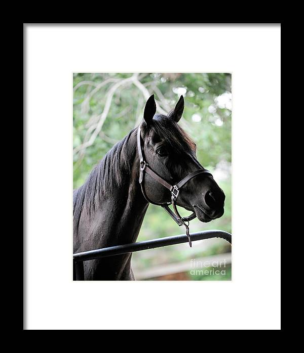 Rosemary Farm Framed Print featuring the photograph King Congie, Looking Ahead by Carien Schippers