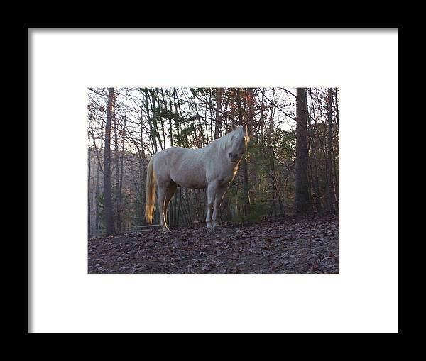 Horse Framed Print featuring the photograph King Of The Hill by Kristen Hurley