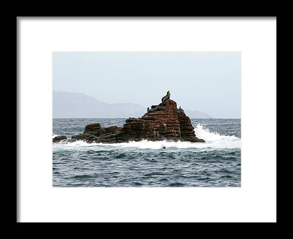 Sea Lion Framed Print featuring the photograph King Of The Hill by Richard Steinberger