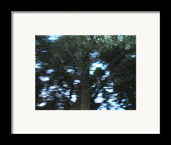 Landscape Framed Print featuring the photograph King Tree by Brad Wilson